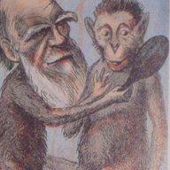 monkey bidness