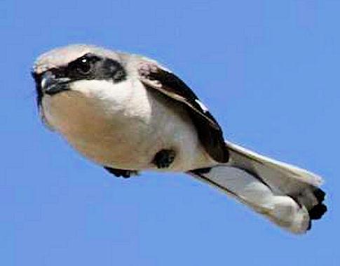 angyrbird.jpg