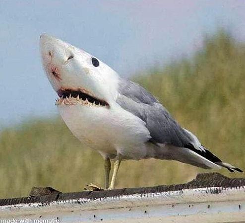 BirdShark.jpg