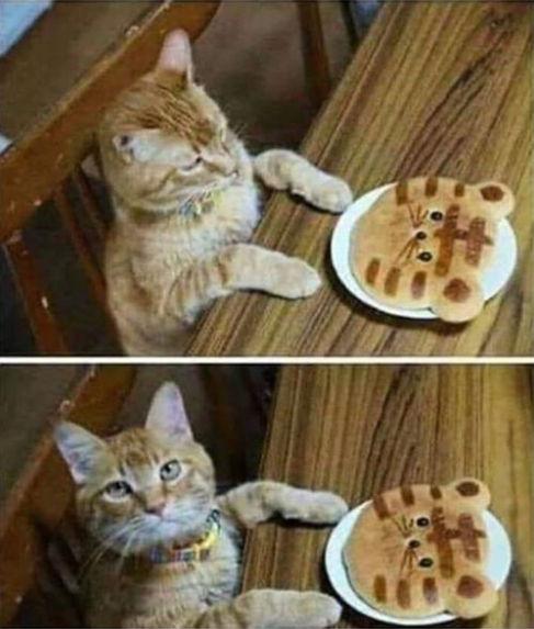 catcake.jpg