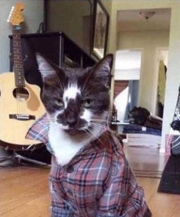 catdressed.jpg