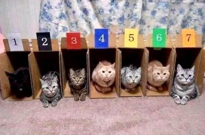 CatRacing.jpg