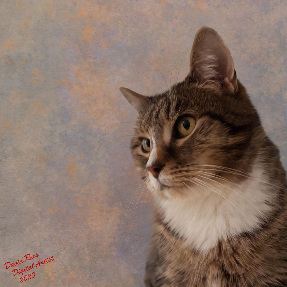 Charlies Cat.jpg