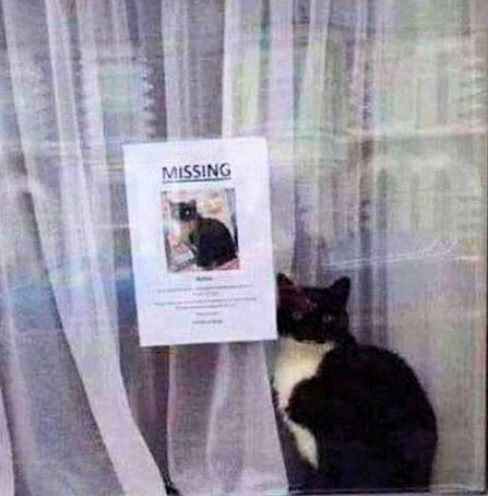MissingCat.jpg