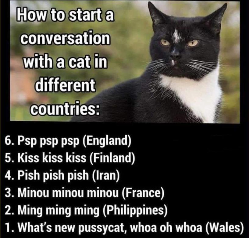 WelshCat.jpg